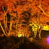 【Japan Autumn leaves】Autumn leaves at Hitachinaka Park are spread under knees!! We can enjoy unique landscape looking them down!