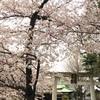 春のお花見散歩(2017/04/01)