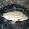 秋の川で大物釣りを満喫できる神釣法。それは『スプリットショットリグ』もどき! ~淡水魚のバチクソ楽しい釣り方を見つけたぜスペシャル!!~