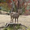 ネットニュースの「最新情報」に、ご用心 京都の旅 by Goto 2020.11.24-27 Ara-kanふたり旅 2日目〔前編〕