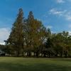 新宿御苑の秋(撮影日は11月2日、今週2回新宿御苑を訪問した)