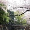 王子の桜 音無親水公園の花筏 〜東京お花見散歩〜