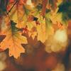 11/29~12/5・今週の運勢【双子座満月と水と火のグランドトライン】