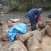 薪原木片づけ