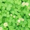 3月17日は「聖パトリックの祝日」~緑に染まる日(*´▽`*)~