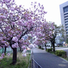 皇居&ストリートマラソン supported by 八重桜
