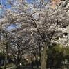 続・そこらへんの桜&花