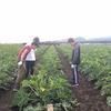 NPO里・つむぎ八幡平、すばる農業体験 その3