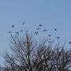 奈良 鳥と歩く/鳥たちのパフォーマンス、なんとも楽しく。冬ならではの澄みとおった囀り、なんとも心地よく。