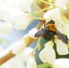 ハチがいっぱい!