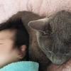 猫枕~(=^・^=)