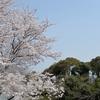 春・散歩。
