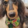 ただの美容院じゃない!【トリミング、グルーミング】愛犬の健康を守ってくれる偉大なる『トリマー』さん!