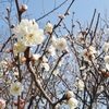 舞鶴公園で梅と自然を楽しむ