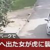 【動画あり】サファリパーク口論の末に車外へ出た女が虎に襲われる 中国・北京