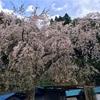 20170415_桜(Bike:120km&Run:5km)