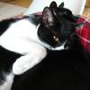 今日の黒猫モモ&白黒猫ナナの動画ー814