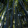 鎌倉観光をするなら必ず訪れたい!竹の庭と抹茶で知られる報国寺を撮影する