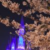夜桜の楽しみ方