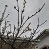 今日のマヤ暦 K84 黄色い種・青い嵐の6日目