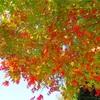 秋の鎌倉ハイキング〜天園コース