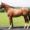 2021-2022 POG 牡馬第3位