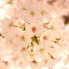 春色(´▽`*)