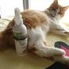 猫ノミ問題 レニーム