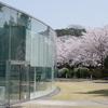 「金澤桜百景」蔵出し写真(その2)