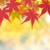 秋から初冬のワードローブ ~ズボラー編~