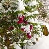 冬を生きる!信州も11月の雪でシンシン・・・。