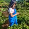 【ヌワラエリヤ】サリーで茶摘み体験♡