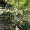 浜松城公園はお散歩コースにおすすめ!思わぬ出会いもあるかも?