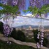 旅と植物 イタリア フィレンツェ2