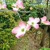 春花のバトン♪