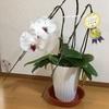 ステキな花