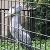 ギネス認定の懸垂型モノレールに乗って千葉市動物公園へ。動くハシビロコウを初めて見る