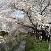 『石おじさん?』京都の哲学の道で、謎のおじさんに石を買わされた話