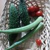 庭の夏野菜や秋の花