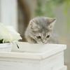 探偵が行う浮気調査の方法と手順は猫で簡単にわかる
