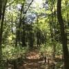 午前、「森のさんぽ道」を歩く。午後、高部務著『新宿物語』を読む(4月25日)。