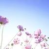 愛、人生、幸せについての心に響く言葉33選