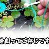 【メダカ】飽和給餌(ほうわきゅうじ)って何?産卵をさせる必要なキーワード!!