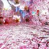 蜷川実花展その2~桜 SAKURA(宇都宮美術館・栃木県宇都宮市)