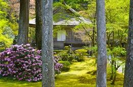 これからが見頃!カラフルな京都府 春のお花めぐり♡