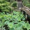 海外生活、ちょっと休憩。久しぶりに京都で暮らす。
