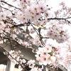 伊都の杜のお菓子教室 桜色の和菓子♪