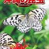 昆虫を瞬時に見分けられる沖縄昆虫図鑑「沖縄の昆虫」
