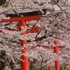 【桜】2021年の桜巡りまとめ