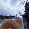 グーグルは秋田犬ブームを予言していた??